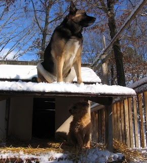 Nice snow in Carbondale, dog needs a home.