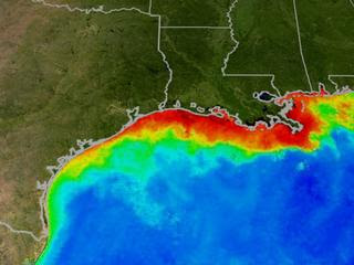 Gulf dead zone may be here for good.